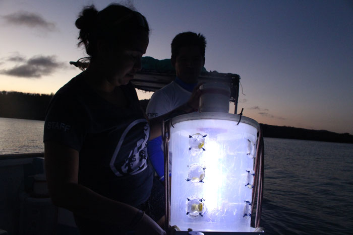 FCD staff collecting larvae with light traps.