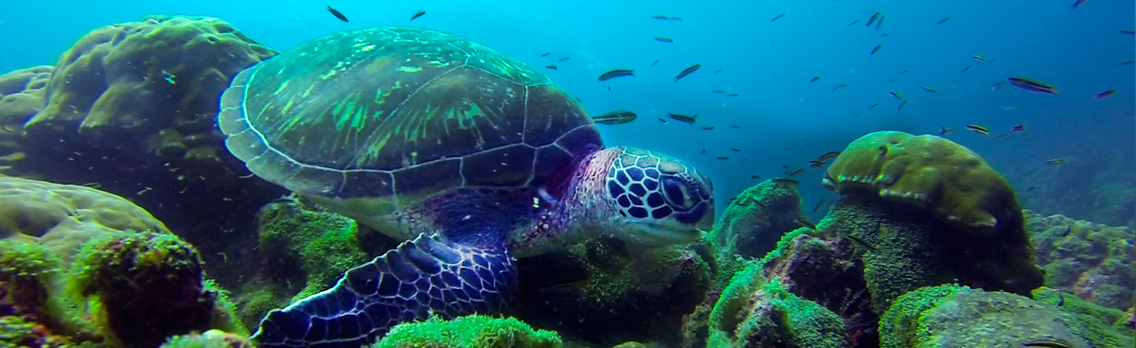 Reducing the Threats for Sea Turtles