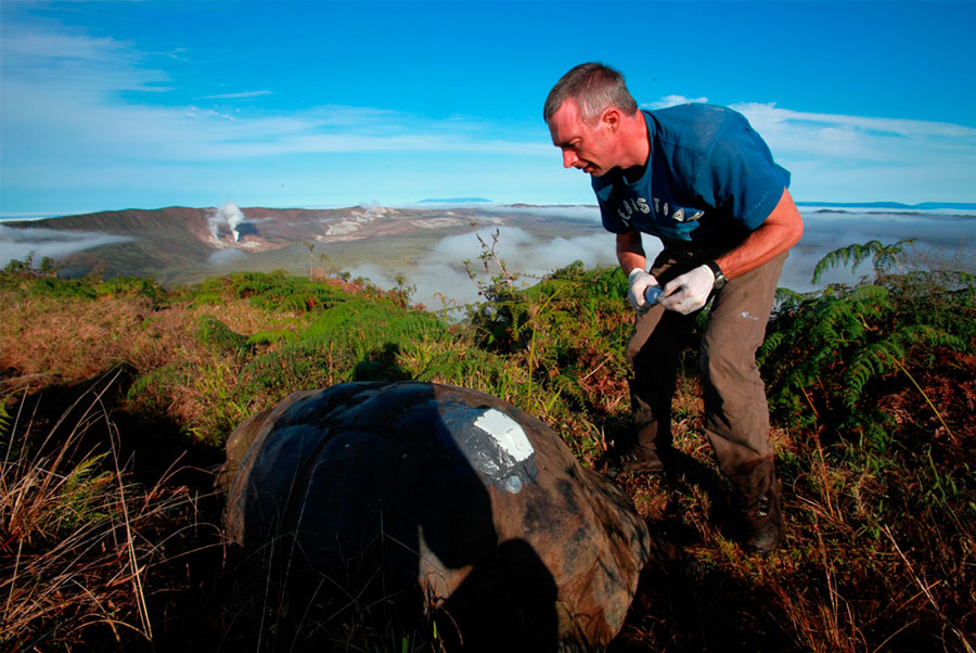 Stephen Blake tagging a Galapagos tortoise with a GPS device in Alcedo volcano (2010)