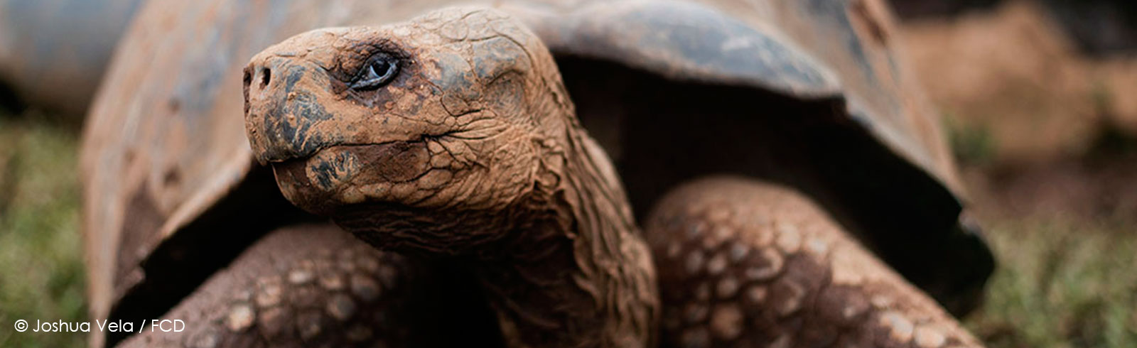 Conservation of Giant Tortoises