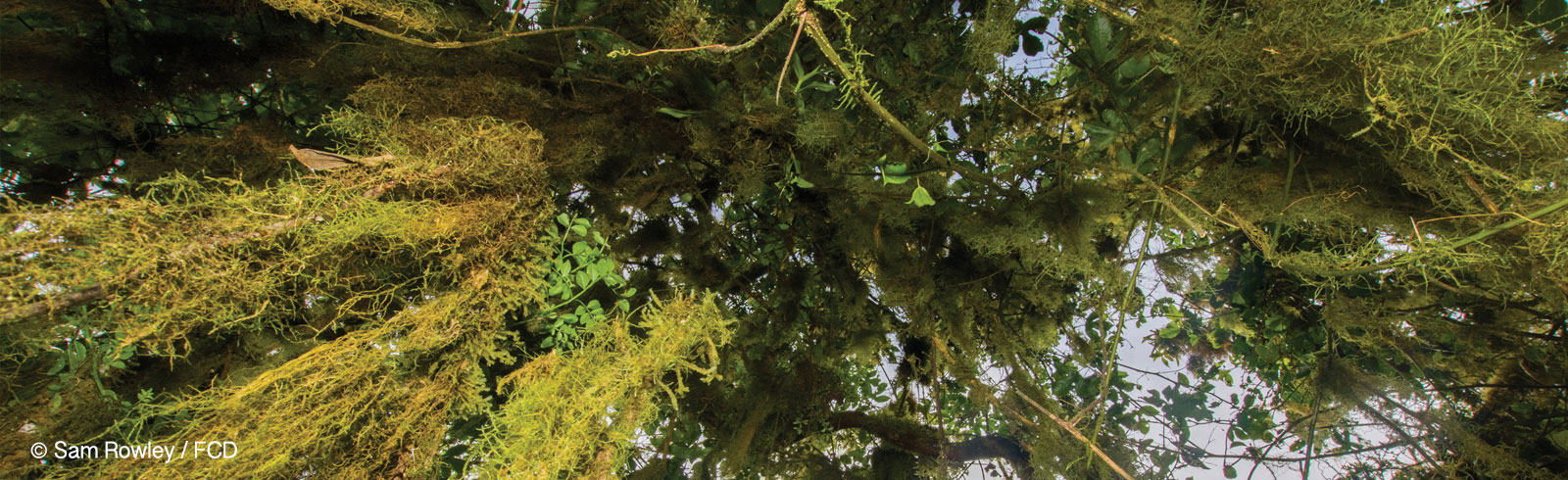 Scalesia Forest